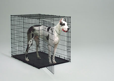 Great Dane Dog Crate Colossal Dog Crate Midwest